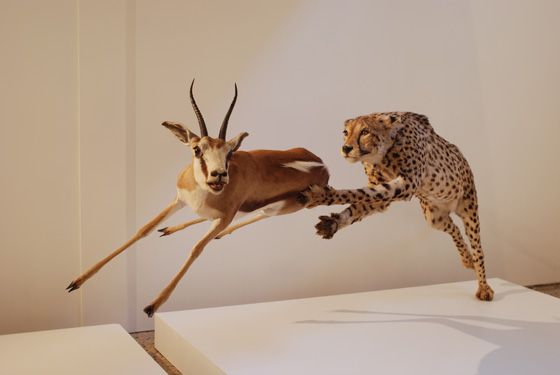 taxidermiste cher 18